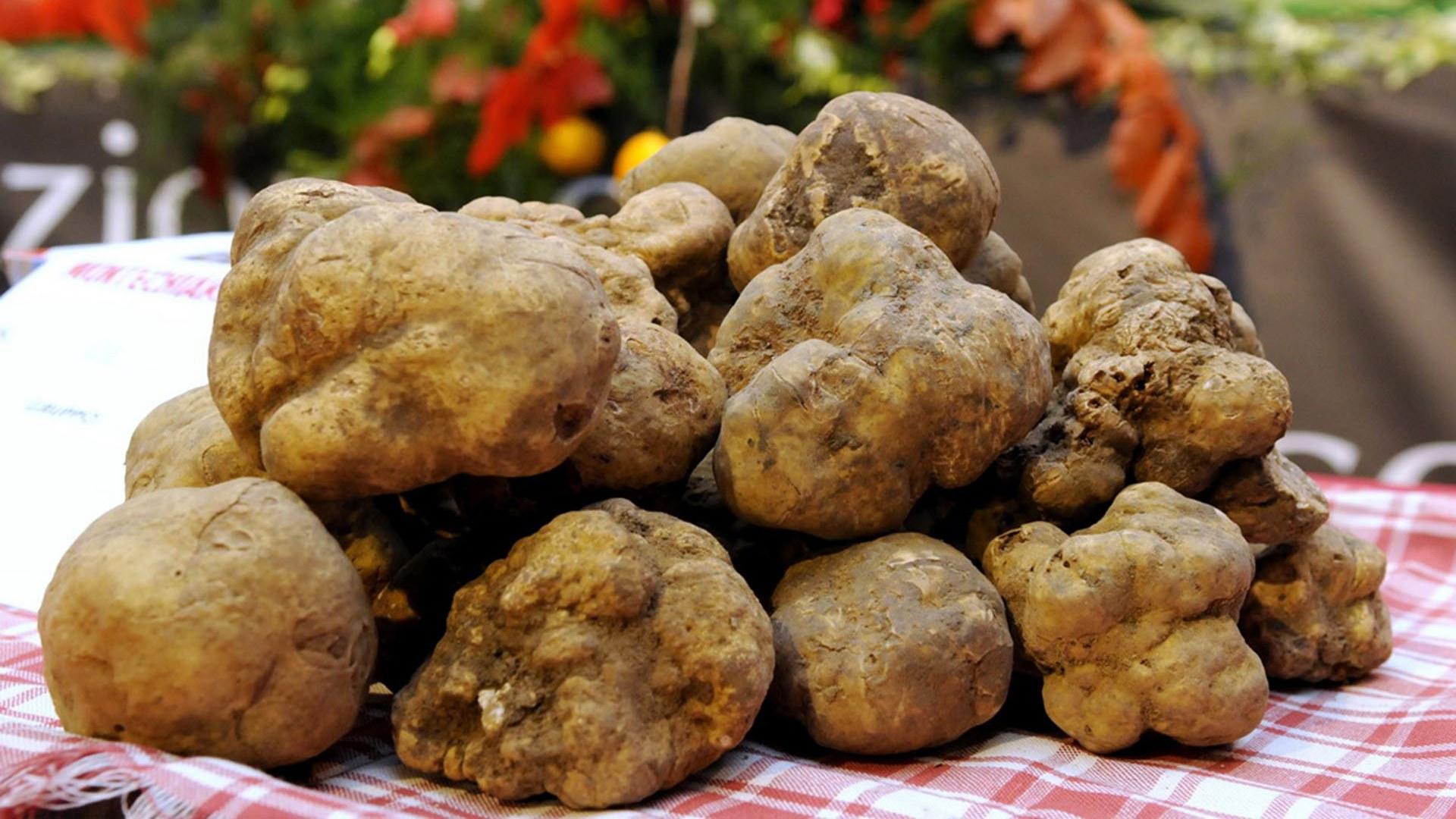 Kvapniausio derliaus šventė Italijoje!