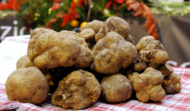 italian-food-excellence-truffles[1] 652